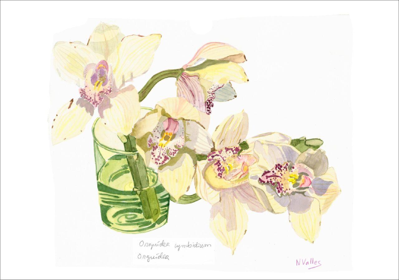 Orquidea cymbidium Orquídea - Orquídea - Orquid